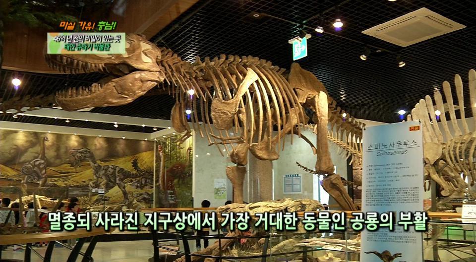 (마실가유 충남) 46억 년 전의 비밀이 있는 곳, 태안 쥬라기 박물관